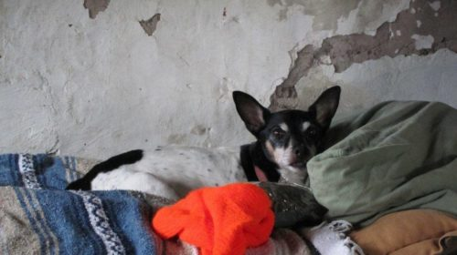 todd-in-bed-at-ranch-2012-ftred-image-500x280 El Paso, Texas