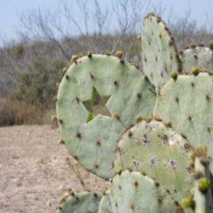 cropped-cactus-with-star-cut-e1461210362554 About