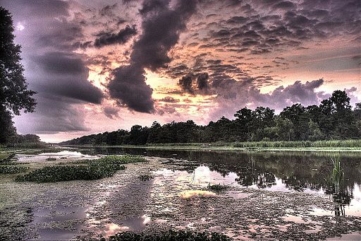 Bayou_sunset How Canadian Acadians became Louisiana Cajuns