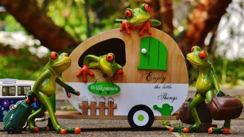 frogs-for-featured-image-500x280 We have only now!