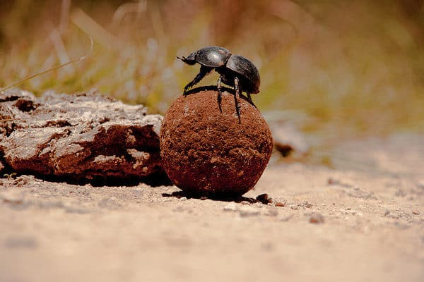Dung-beetle-outlook-600x400 5 steps to grow your adventure outlook!