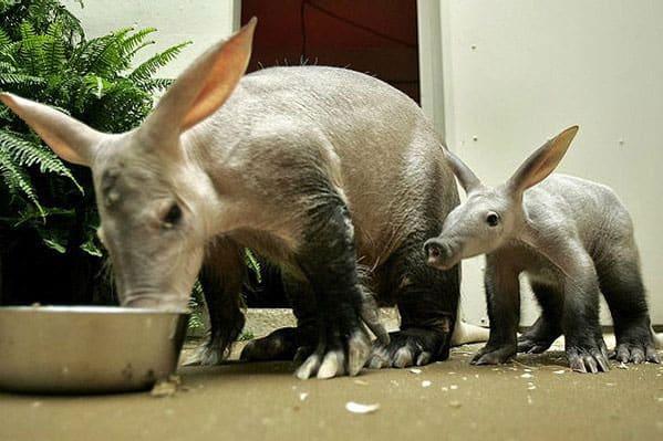 Aardvarks Southwest Airlines Boarding Game