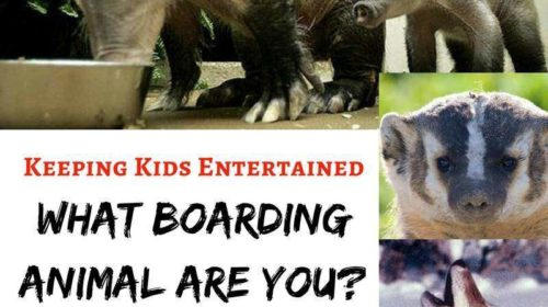 playing-southwest-airlines-boarding-animal-game-to-keep-kids-entertained-500x280 We have only now!