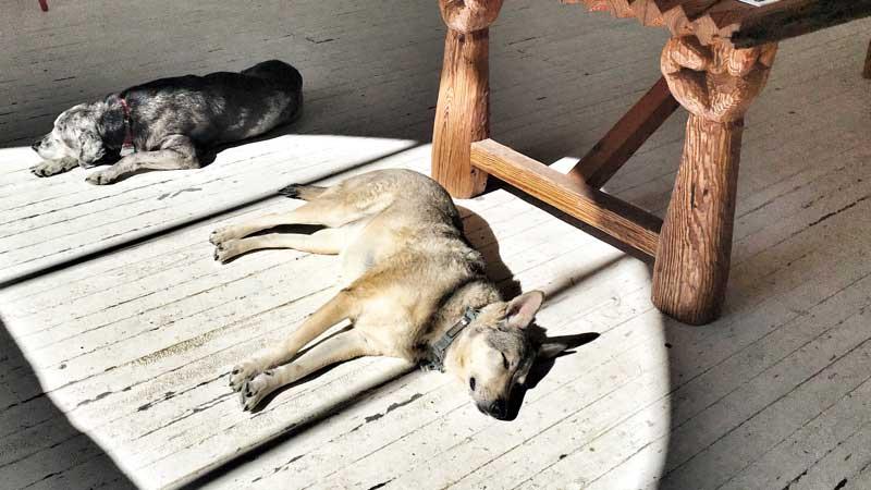 dogs-marfa-fb Marfa, Texas