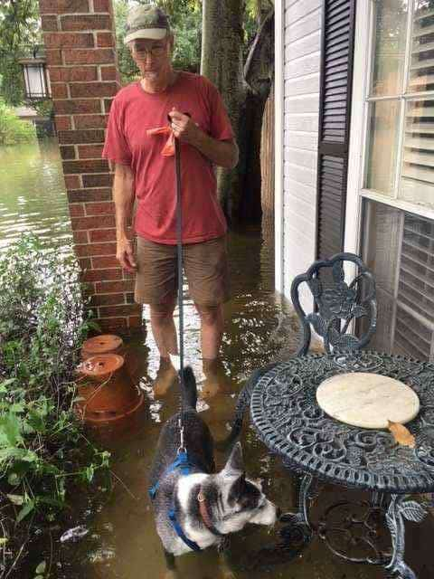 dog-looking-for-place-to-pee-e1504140306225 Surviving Hurricane Harvey flooding - 8 practical ways to cope